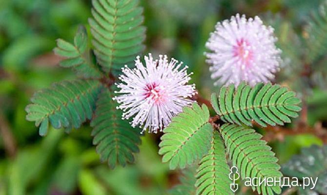 Удивительные способности растений