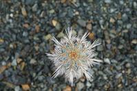Размножение кактусов семенами