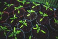 Рецепты почвосмесей для рассады