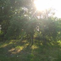 Про наш сад