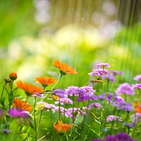 Советы новичкам для ухода за цветами летом