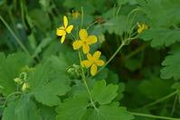 Растения на страже вредителей