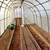 Рациональная для нашей семьи, технология выращивания огурцов.