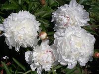 Первая неделя июля.., цветем...