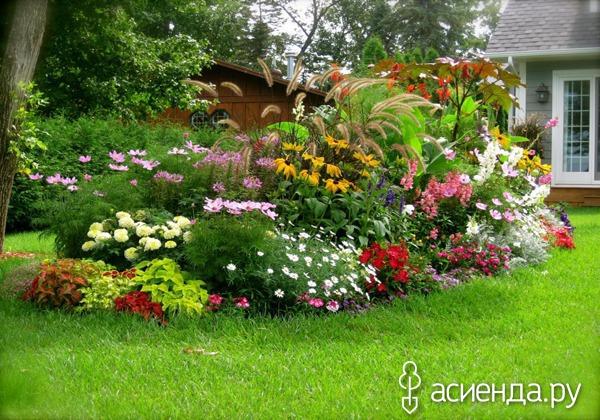 Могут ли переопыляться лилии