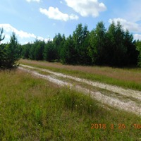 Прогулка с детьми в лес)))