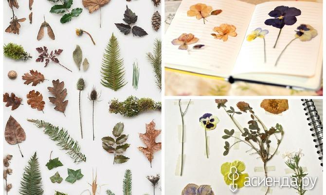 Несколько советов для создания гербария