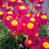 Какого цвета наше лето!
