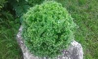 Вот такой салатик вырос!!!
