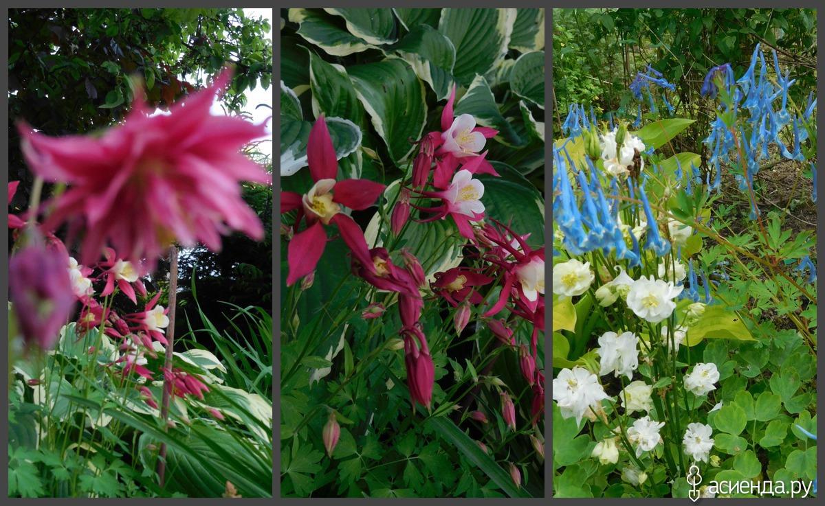 Медовый сад - Дача, ферма и пасека