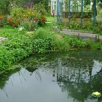 Новые растения в нашем пруду