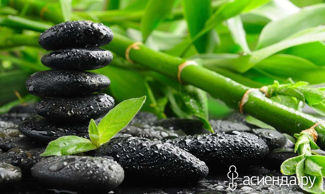 9 растений для положительной энергии в доме