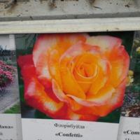 Это роза или шиповник...?