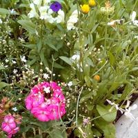 Цветущий июль