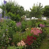Розы и виды цветущего сада