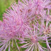Июльское цветение ( микс цветов)