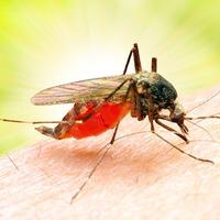 Любопытные факты о комарах