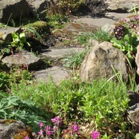Рокарий: время собирать и разбрасывать камни