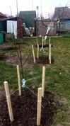 Посадили яблони, а они не показывают признаков жизни... Что делать???