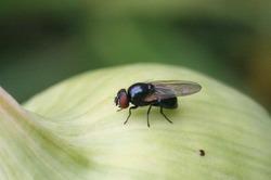 Способы борьбы с мухами в доме.