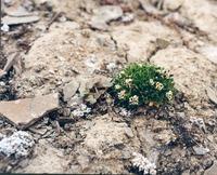 Известковые почвы