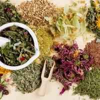 Травы для детоксикации организма
