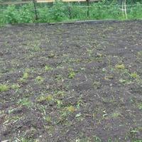 Вспахали мне сегодня огород