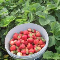 Ещё про урожай, ягоды, фрукты.