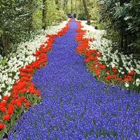 Цветовые схемы для сада