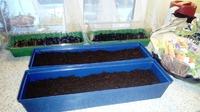 Семена травок для чая