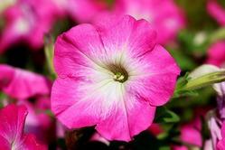 Однолетние цветы: заботы в марте