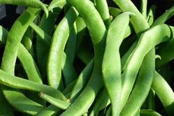 Фасоль: особенности выращивания