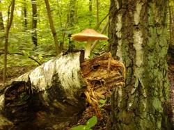 Сказки леса. Привал первый.
