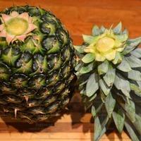 9 овощей, способных вырасти из пищевых отходов