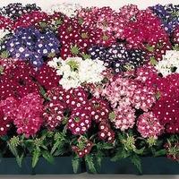 Март: сажаем семена цветов на рассаду
