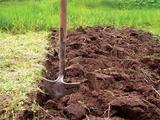 Отходы или удобрения: моча как источник питания для растений. Моча как удобрение – факторы риска и предрассудки к использованию на огороде