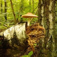 Сказки леса. Привал второй.