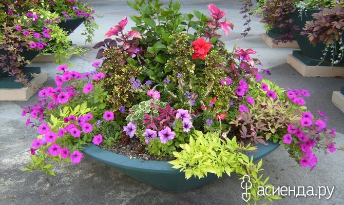 Азы контейнерного садоводства