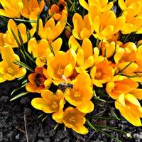 Первые цветочки и первые пчелки.