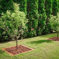 Целебные деревья на участке