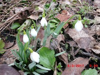 А у нас весна!!!