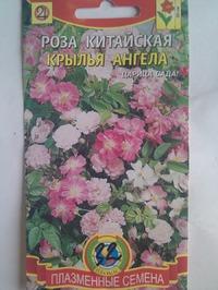"""Роза китайская """"Крылья ангела"""""""