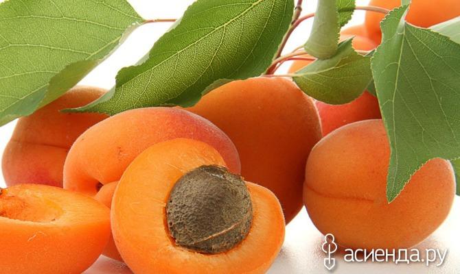 Выбираем зимостойкие абрикосы