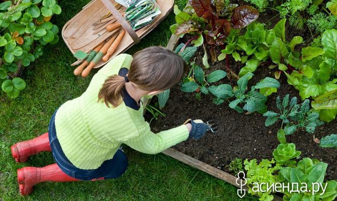 Секреты удачного садоводства.