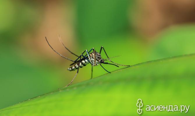 Как отогнать насекомых от пикника?