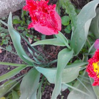 Весна, тепло и цветы.