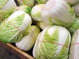 Как вырастить пекинскую капусту на своем участке?