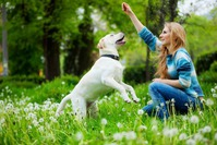 Как обучить собаку выполнять команды?