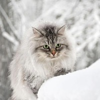 У нас зима была с утра, а еще у меня не всходят огурцы...