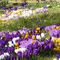 Как добиться хорошего цветения растений?